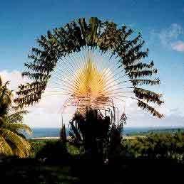 Le vieillissement, du côté des Antilles, chronique de Serge Guérin