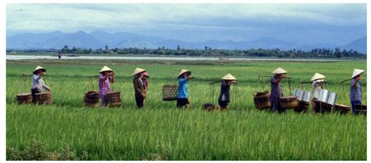 Vietnam gourmet ou les secrets de la cuisine asiatique…
