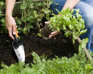 Facilitez-vous le jardinage avec les nouveaux outils pour balcons et terrasses Fiskars