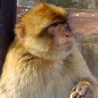A 70 ans, Simone Coupé se bat pour sauvegarder le vie de son singe Titi