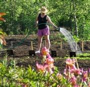 Plantes et jardins : les seniors n'achètent plus et les ventes chutent depuis deux ans
