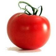 Une tomate 'anti-âge' vient d'être lancée en Grande-Bretagne