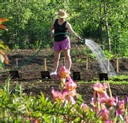 Le jardinage : une activité qui a le vent en poupe grâce aux jeunes seniors