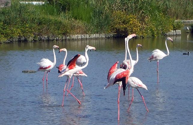 Les réserves naturelles de France sont ouvertes aux visites tout l'été