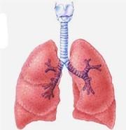 Les râleurs perpétuels accélèrent le déclin de leurs poumons