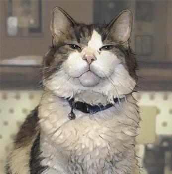 Oscar, le chat qui pressent la mort des patients dans une unité de soins Alzheimer