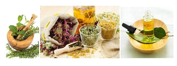 Salon Bien-être, Médecine douce et Thalasso : ces plantes qui nous soignent...