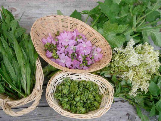 Les plantes : une réponse aux problèmes de santé ?