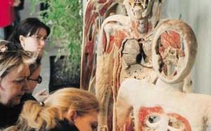 Body Worlds et The Mirror of Time : le cycle de la vie et du vieillissement exposés à Londres