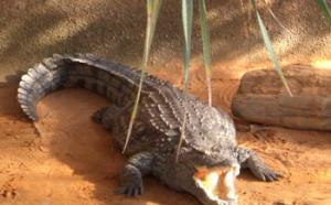 Cet été 'La Ferme aux Crocodiles' vous emmène en Afrique…