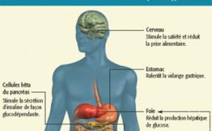 Diabète de type 2 : les incrétino-mimétiques, une étape supplémentaire entre les traitements oraux et l'insuline