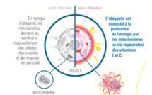Le point sur les diverses propriétés de l'ubiquinol